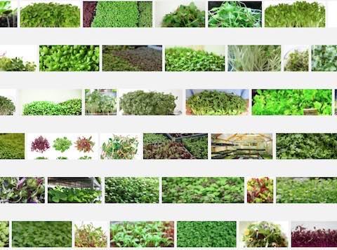 compilation photos microgreens