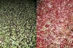 Catalog:Microgreens