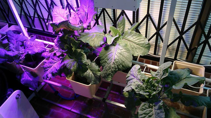 photo of plants in hydroponic garden under grow lights.