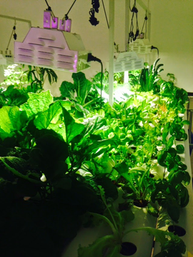 photo of multiple plants in a horizontal-channel growing system