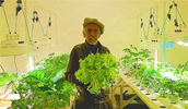 Photo of man harvesting hydroponically grown lettuce.